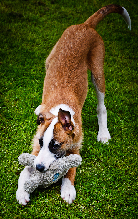 Swindon Pet Photographer   Beautiful Dog Portraits   Petsmartphoto