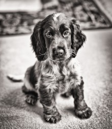 Pet Photography Wiltshire – Canine Photography