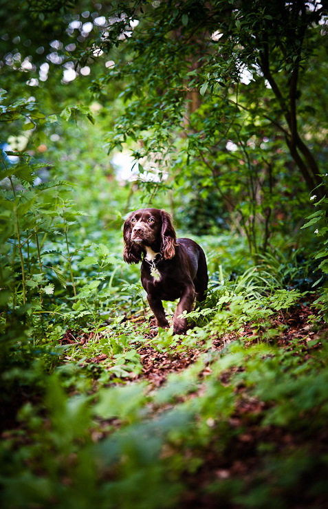 Pet Photography Wiltshire-006