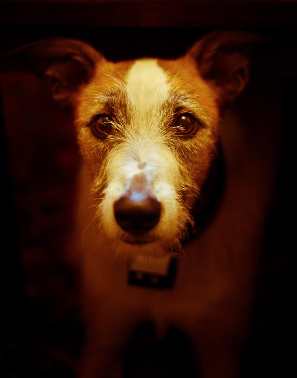 Dog Photography Swindon | Creative Dog Photos | Petsmartphoto