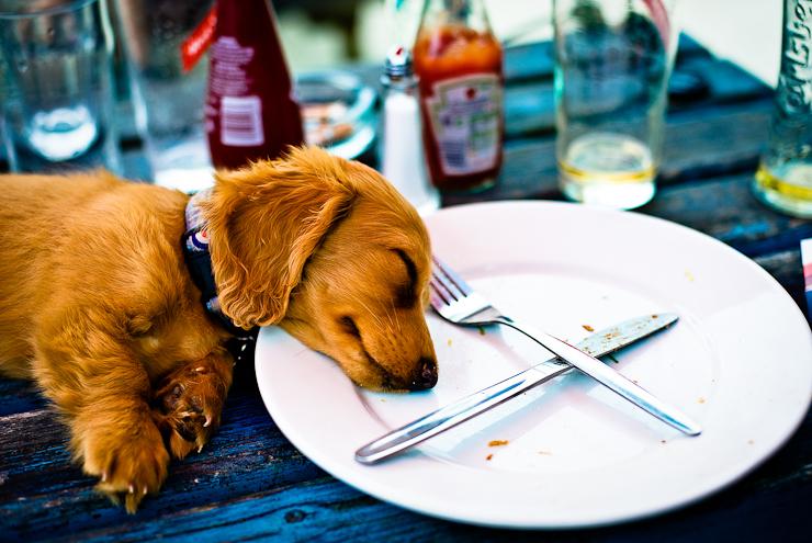 Creative Dog Photography | Pet Photography Wiltshire | Petsmartphoto