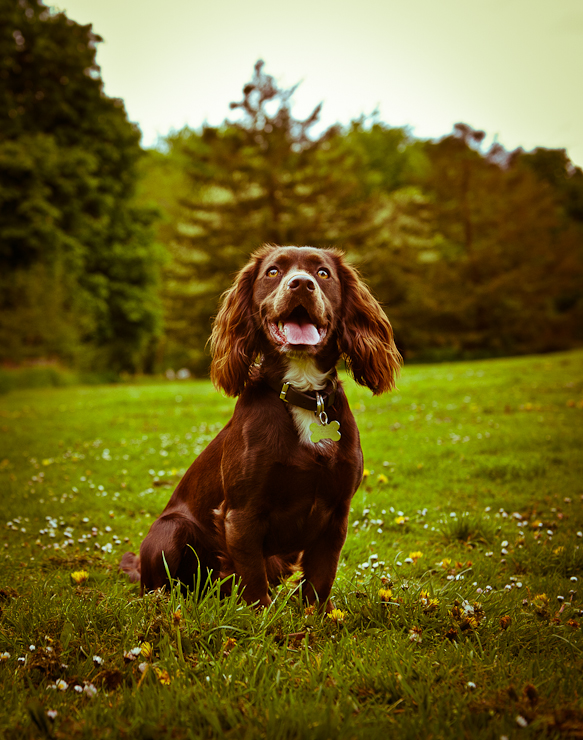 Pet Photography Wiltshire-022