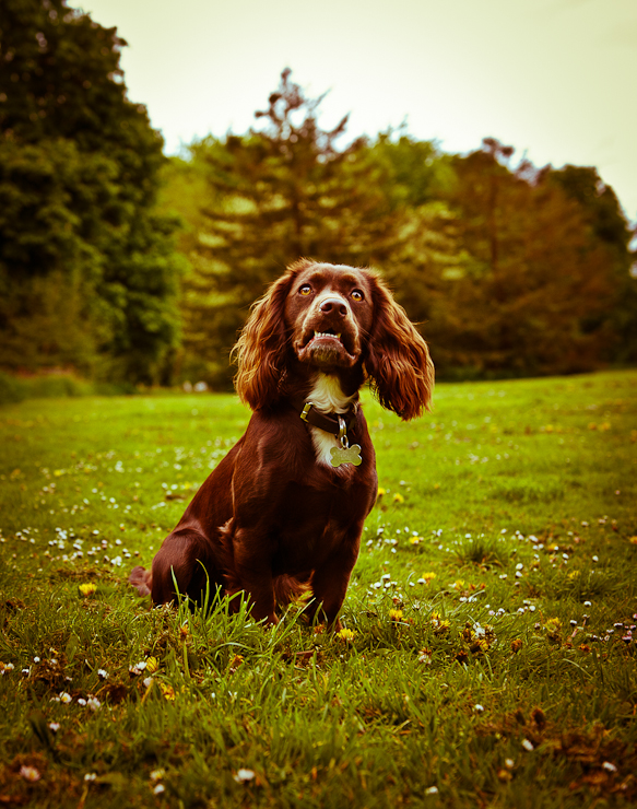 Pet Photography Wiltshire-023