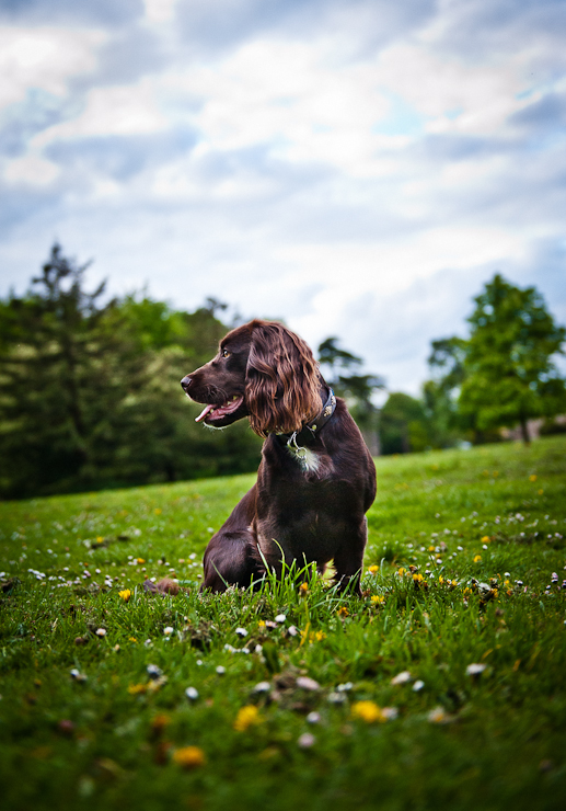 Pet Photography Wiltshire-026