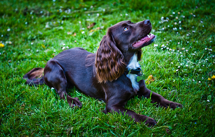 Pet Photography Wiltshire-033