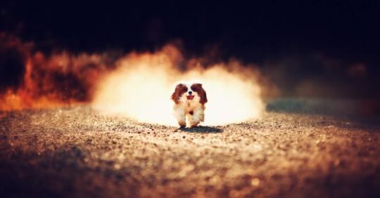 Pet Portraits Wiltshire – Dog Photography – Petsmartphoto