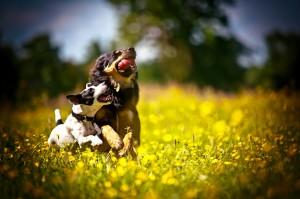 Pet Photography Oxford – Chianti, Bert, Briar & Harry.