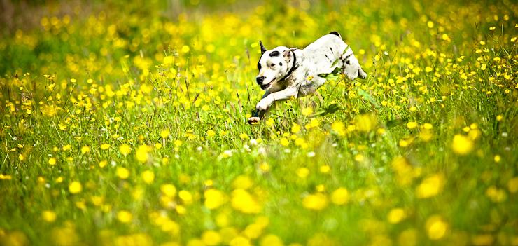 Wiltshire Canine Photography | Stunning Dog Portraits | Petsmartphoto