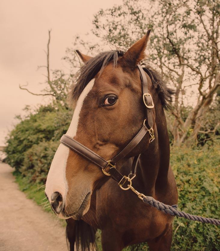 Horse photography Wiltshire, Berkshire, Hampshire, Oxfordshire.