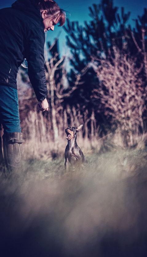 Petsmartphoto-011
