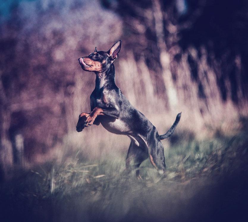 Petsmartphoto-014