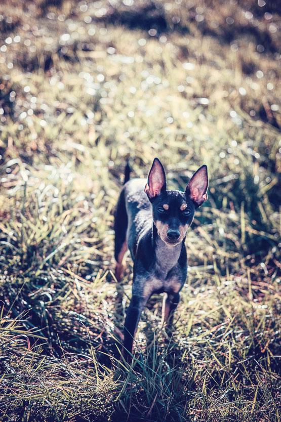 Petsmartphoto-017