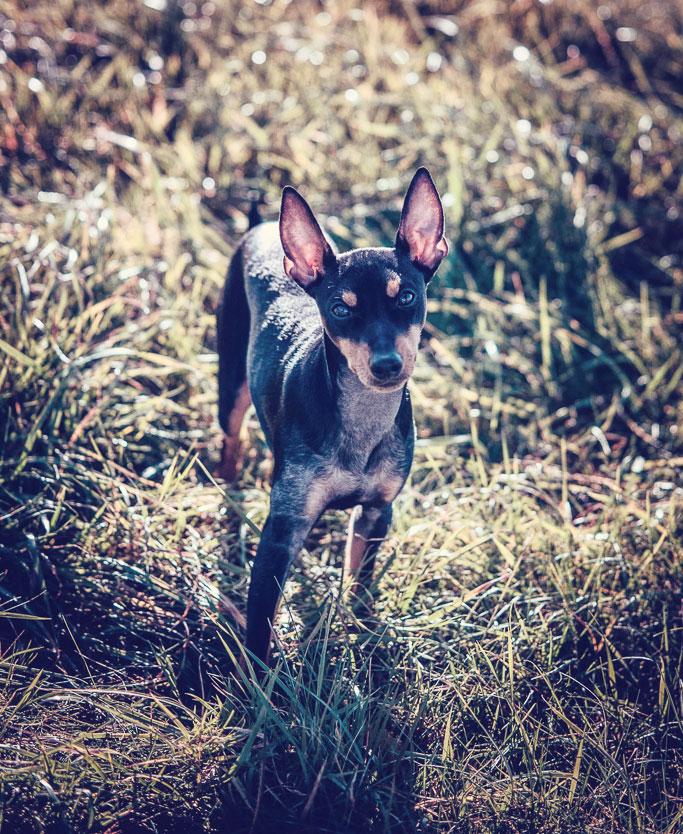 Petsmartphoto-018