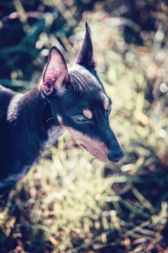 Petsmartphoto-020