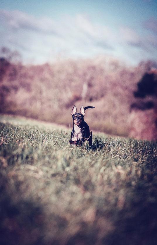 Petsmartphoto-021