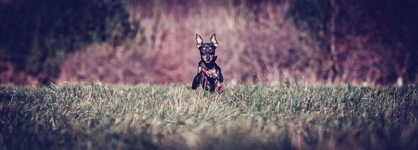 Petsmartphoto-023