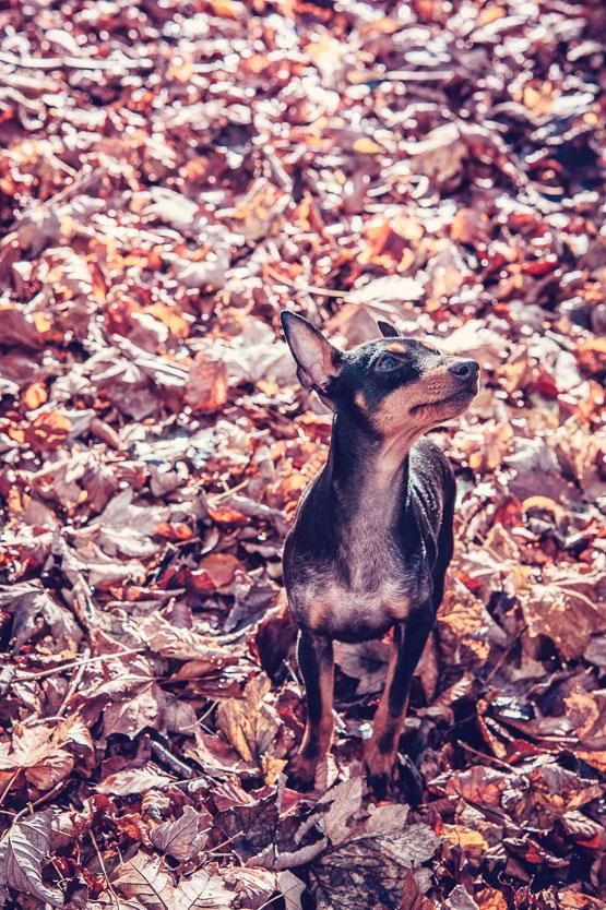 Petsmartphoto-027