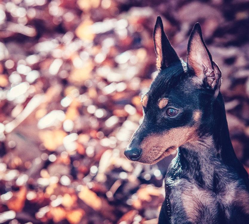 Petsmartphoto-032